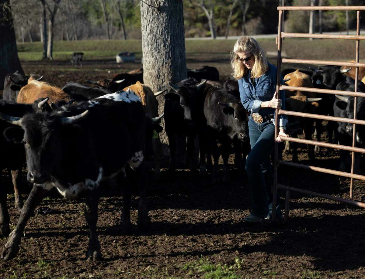 Director Darla Weaver opens a gate to allow cattle to feed at Three Cross Ministry, Tuesday, March 2, 2021, in Montgomery. Lone Star Cowboy Church's Three Cross Meat Ministry, formerly Lone Star Beef, has a goal to provide 72,000 meals in 2021.