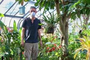 """Artist Peter Greenwood sets up his exhibit """"DAZZLE: A Garden of Glass"""" in the greenhouse at Connecticut's Beardsley Zoo in Bridgeport."""