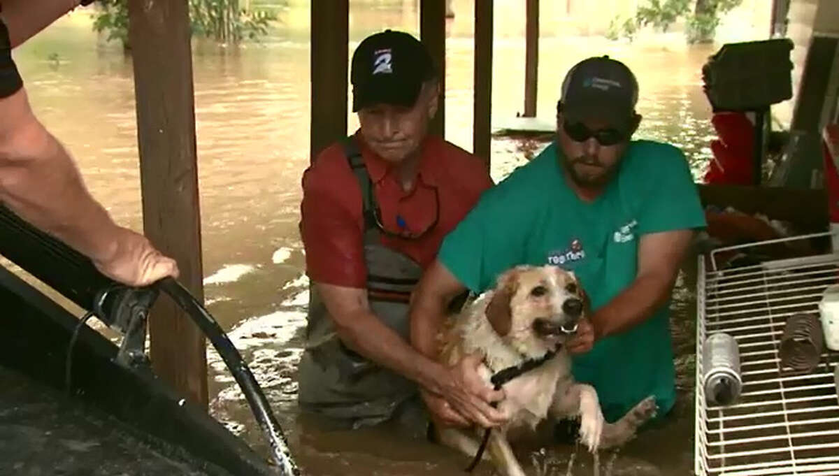 Phil Archer was covering our latest historic flood when he came upon a dog in peril.He and photographer Jeovany Luna helped save the dog.