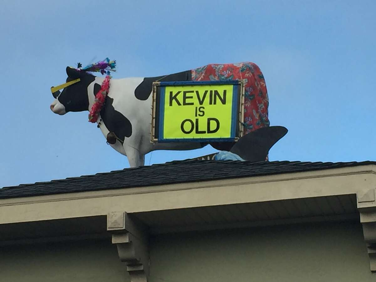 Even the Roof Cow Thinks Kevin Fisher-Paulson is old.