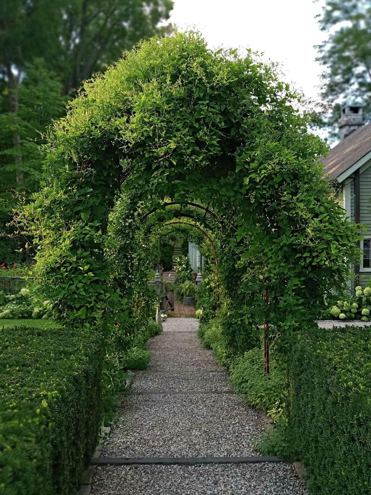 Scene from garden.