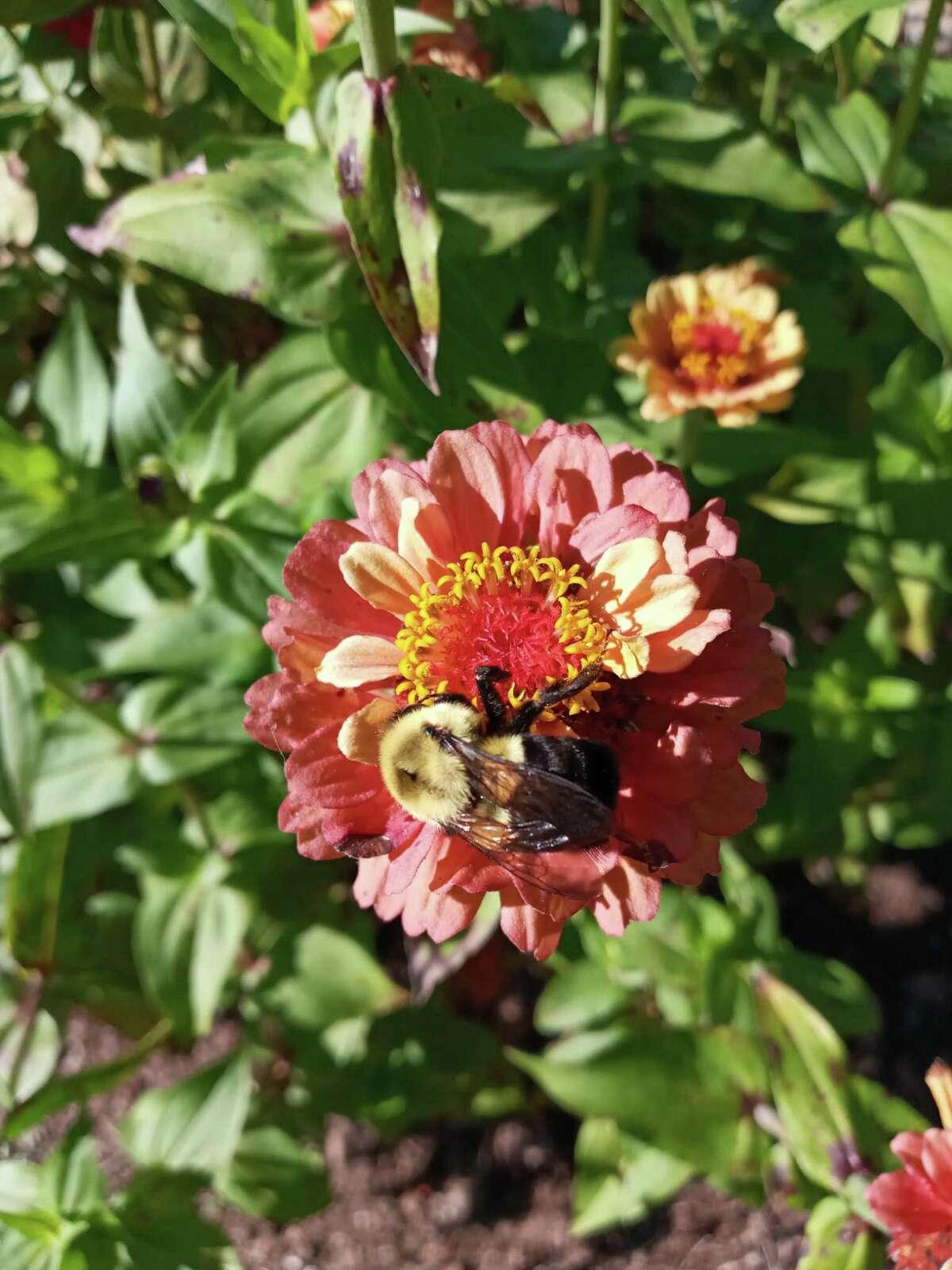 Close-up in garden.