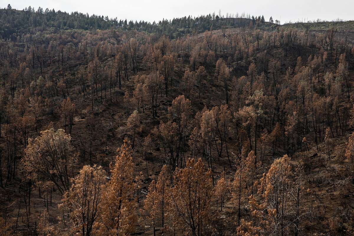 Burn scars left by last year's LNU Complex fires are seen along Butts Canyon Road, where a large development is being considered.