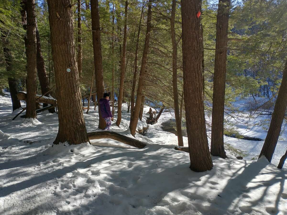 Winter sunlight brightens the woods at Lisha Kill Natural Area in Niskayuna on a recent afternoon.