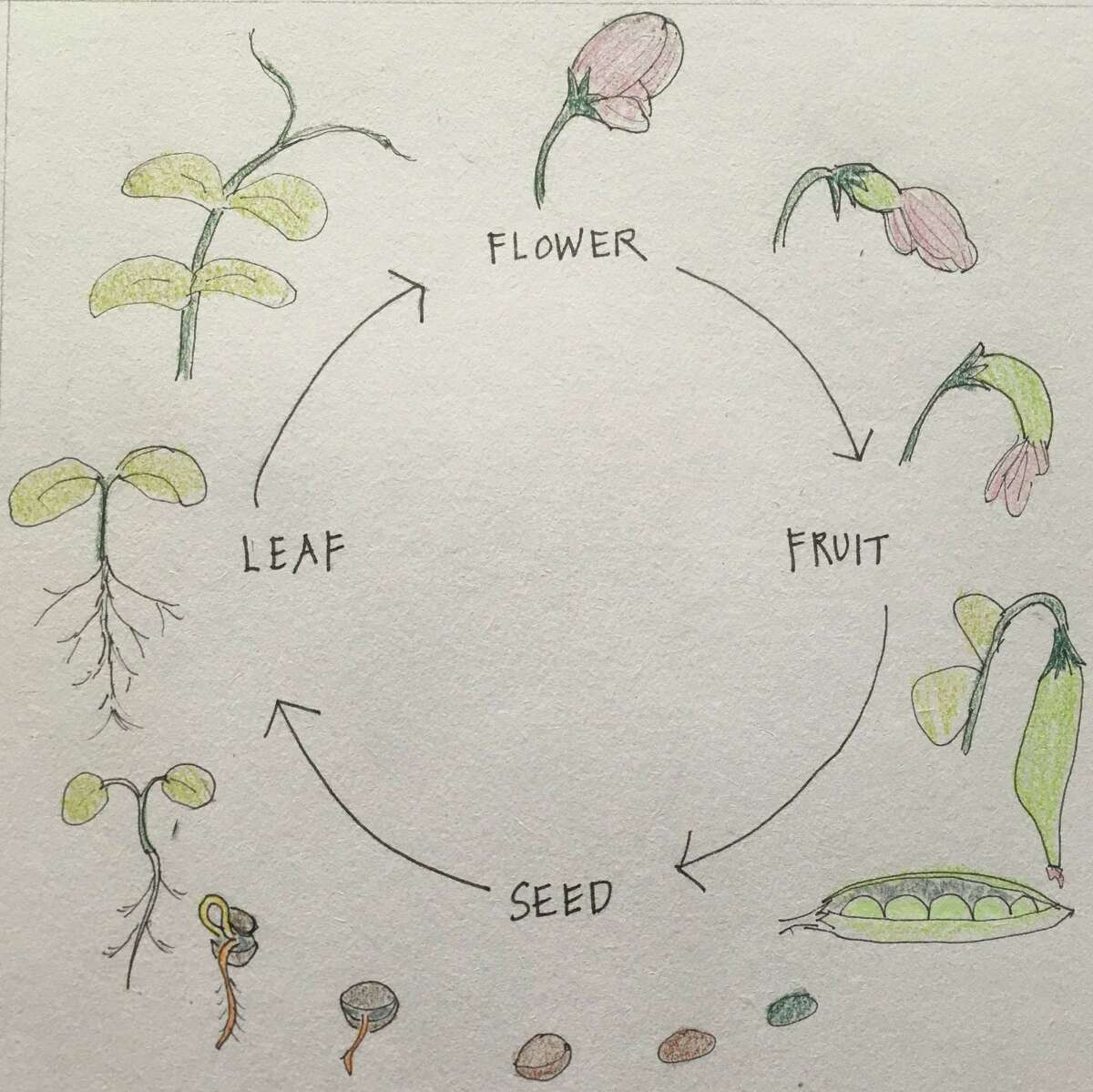 Barbara Putnam is leading Planting seeds: Activity, metaphor, ritual, March 20 at Wisdom House.