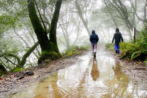Don't miss your last chance to soak up the Bay Area's rain hiking season.