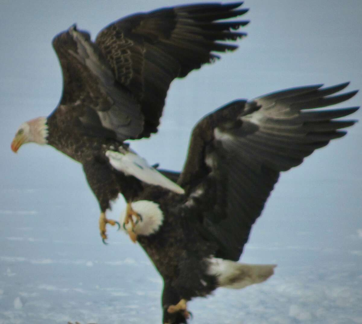 Tom Surprenant: On Feb. 24 there was a battle on the ice in the Great Sacandaga Lake area.
