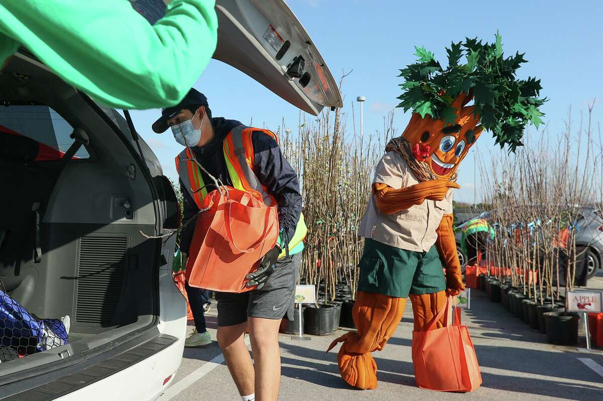 San Antonio Parks and Recreation's new tree mascot, Parker the Texas Red Oak, helps gives away 600 fruit trees with staff and volunteers at Texas A&M San Antonio on Saturday, March 6, 2021.