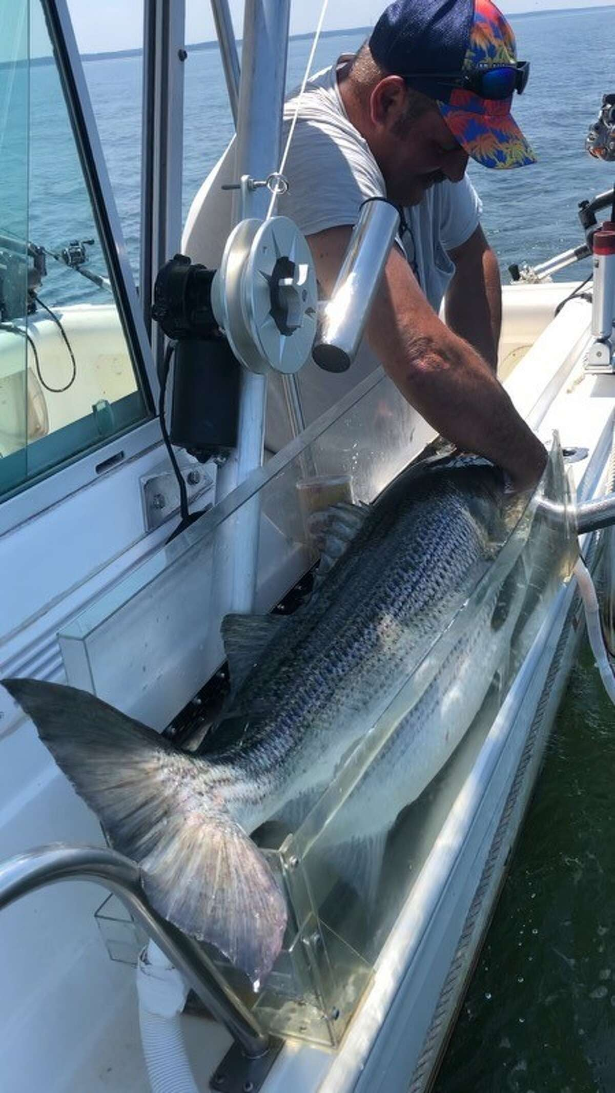 """Fisherman John Utter of Kingston hold his freshly caught 47-inch striped bass in the """"Re-Vive Well,"""" a Lexan fish-sized box that corrals the fish, holding it facing into a pumped flow of oxygenated water surging directly into its mouth and across its gills supplying the much needed oxygen for quick recovery and release."""