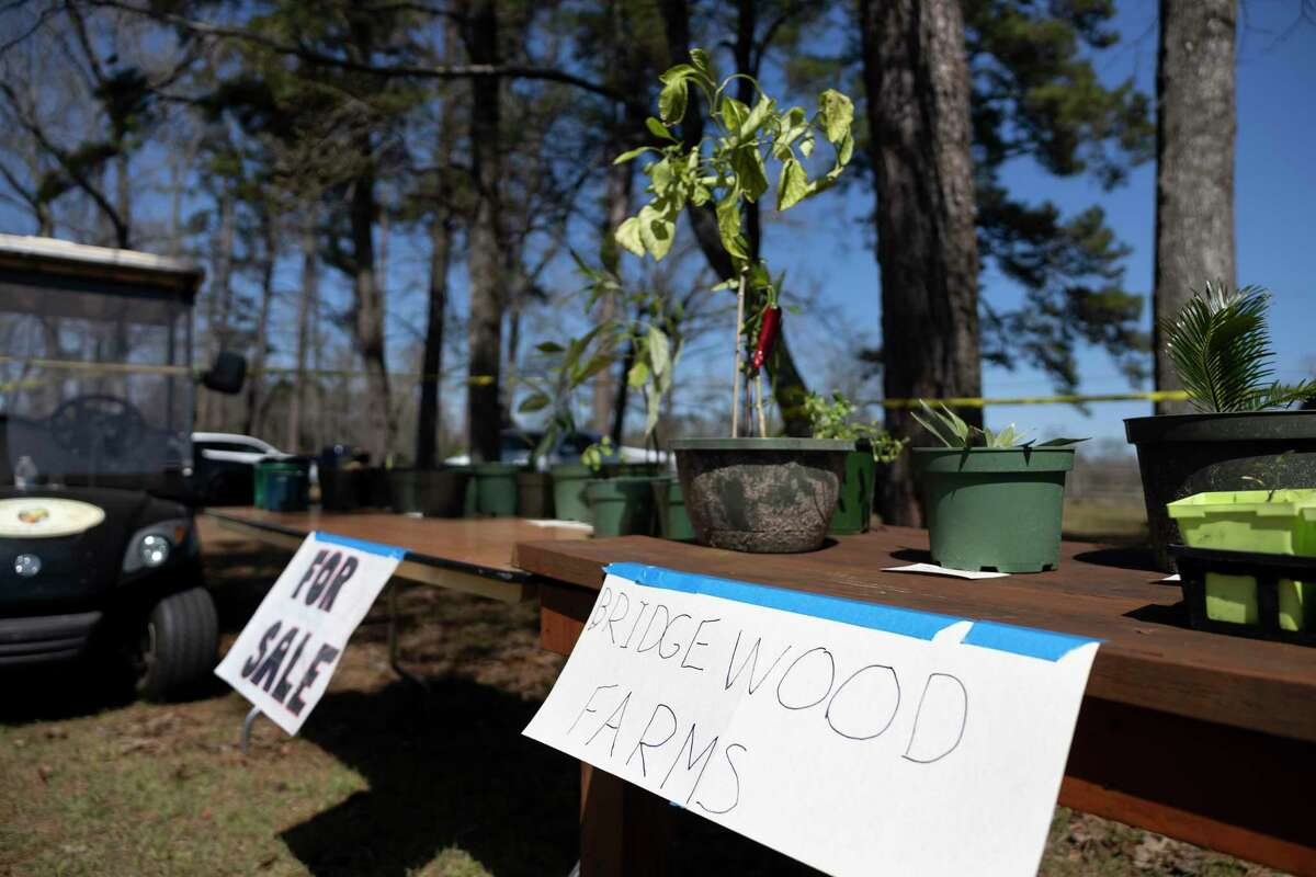 As seen, plants are sold by Bridgewood Farms during the inaugural Spring Fever Craft Market, Saturday, March 6, 2021, in Conroe. Proceeds raised will be directed towards scholarships, activities to combat social isolation and general operating cost for its intellectually and developmentally disabled clients.
