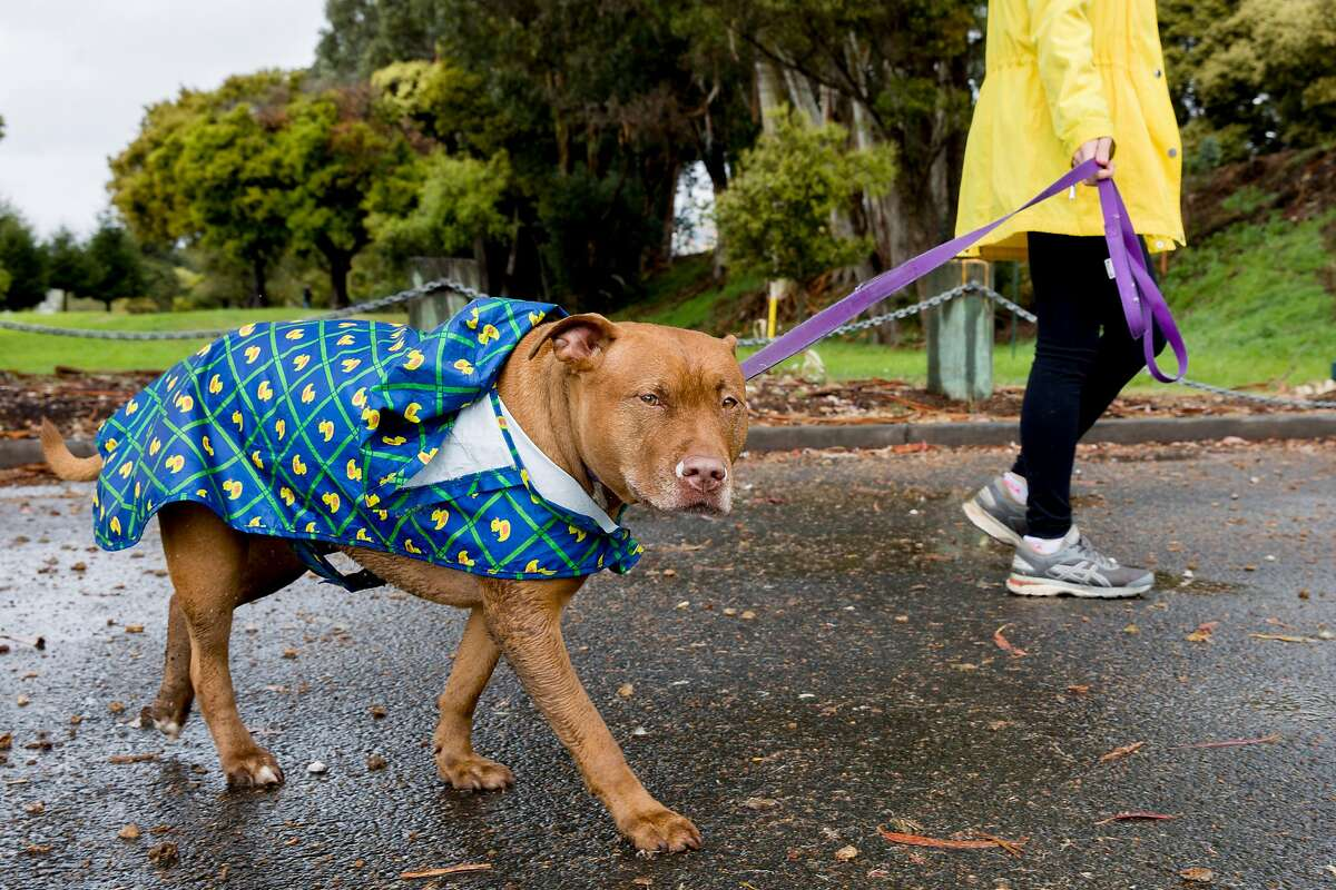 Allie Bauer of Oakland and her dog Annie sport rain coats as they walk through Aquatic Park in Berkeley, Calif. Saturday, March 7, 2020. After an entire month with no wet weather, Bay Area residents woke up to much anticipated rain showers Saturday morning.