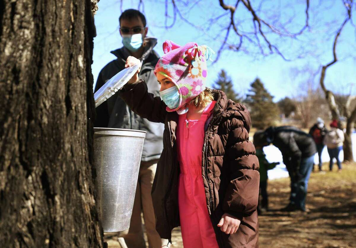 Madison Peck, 5, of Monroe, and her father, Jon, see first hand how maple sap is tapped and collected during a maple sugaring demonstration at the Nature and Arts Center in Trumbull on Sunday.