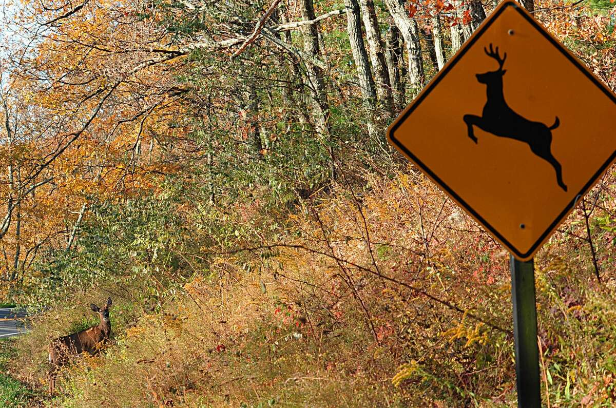 More deer vehicle collisions occur in November than any other month of the year, as breeding season peaks for the animal.