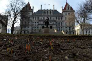 Tulips rise from the East Capitol flowerbed on Monday, March 8, 2021, in Albany, N.Y. A steady increase in temperature is forecast throughout the week. (Will Waldron/Times Union)