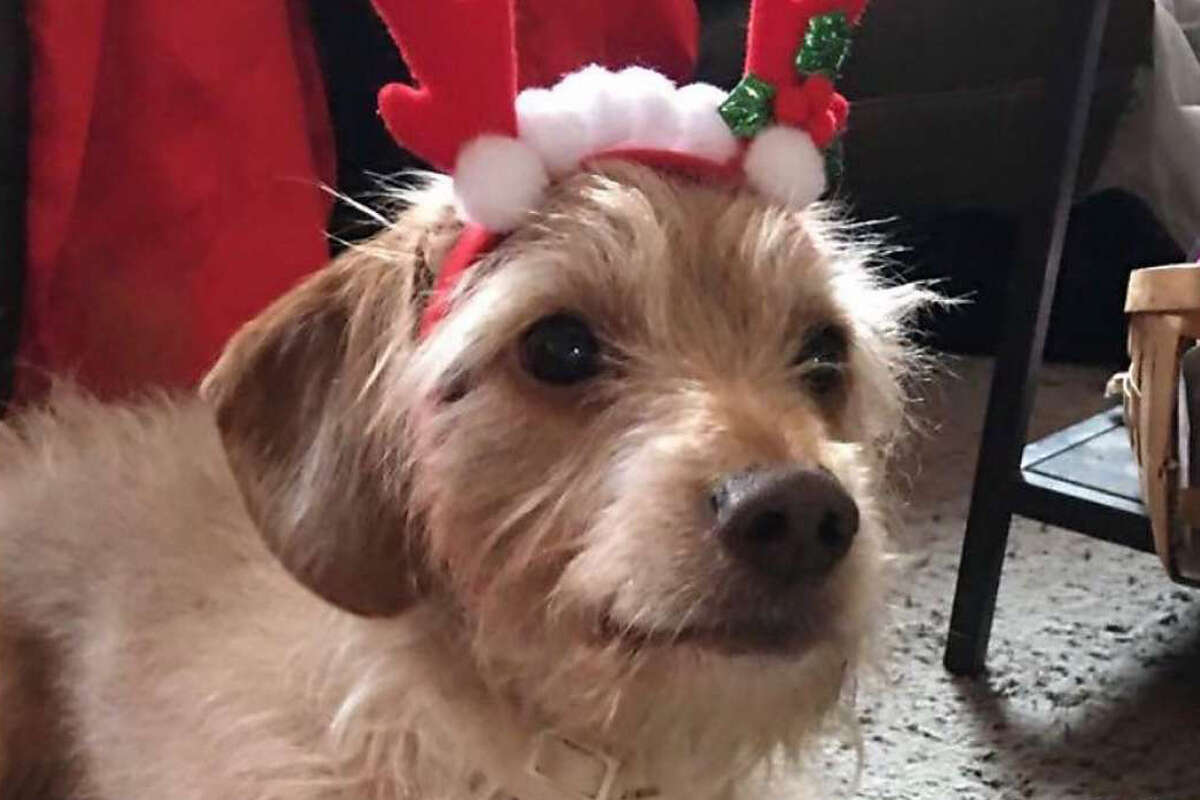 The Gardley's pet dog Marley went missing Feb. 10 after he dug out of the backyard of their home. He was adopted by another family.