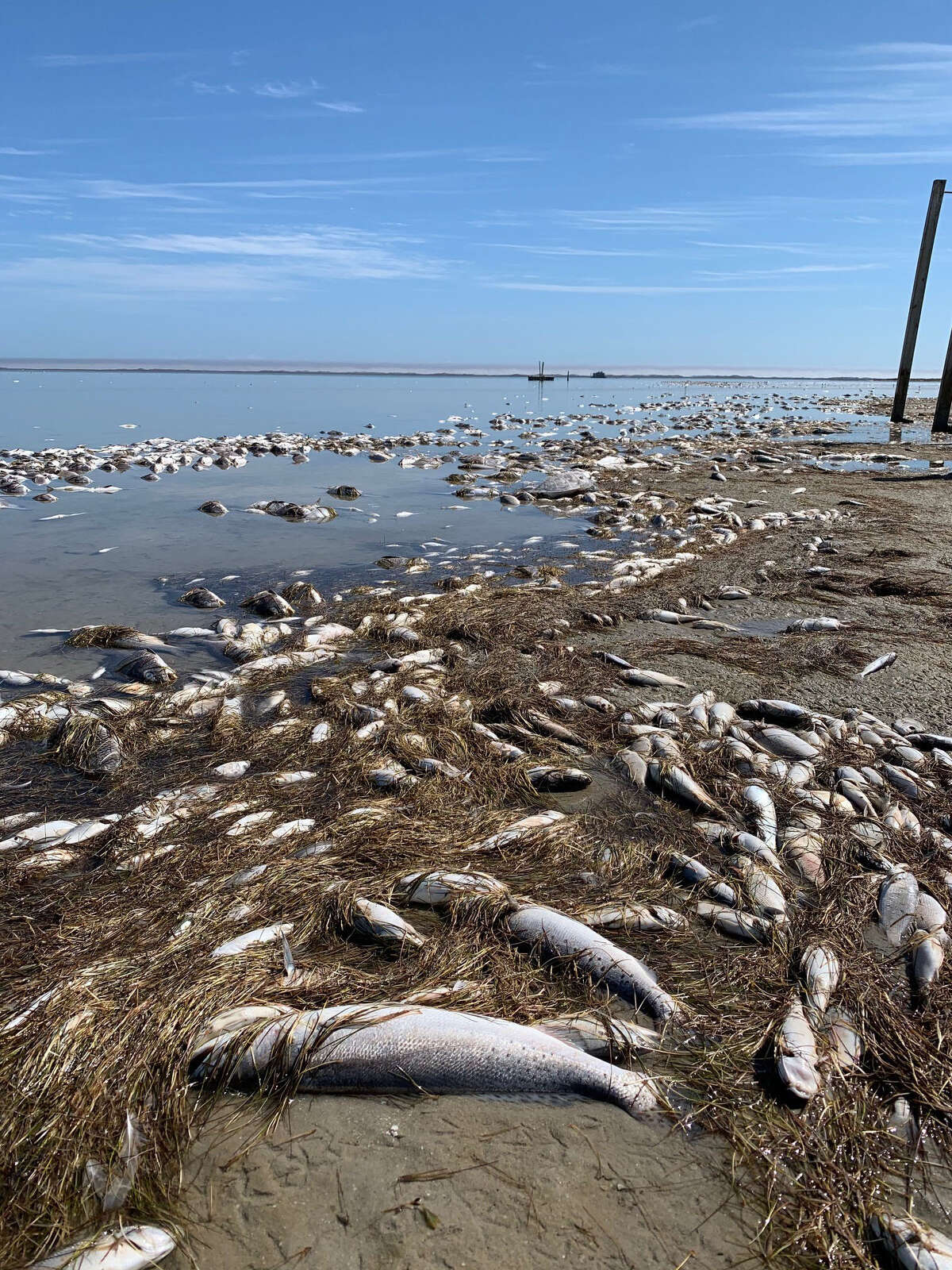 Texas Parks and Wildlife Department announced Wednesday that the Texas snowstorm killed at least 3.8 million fish.