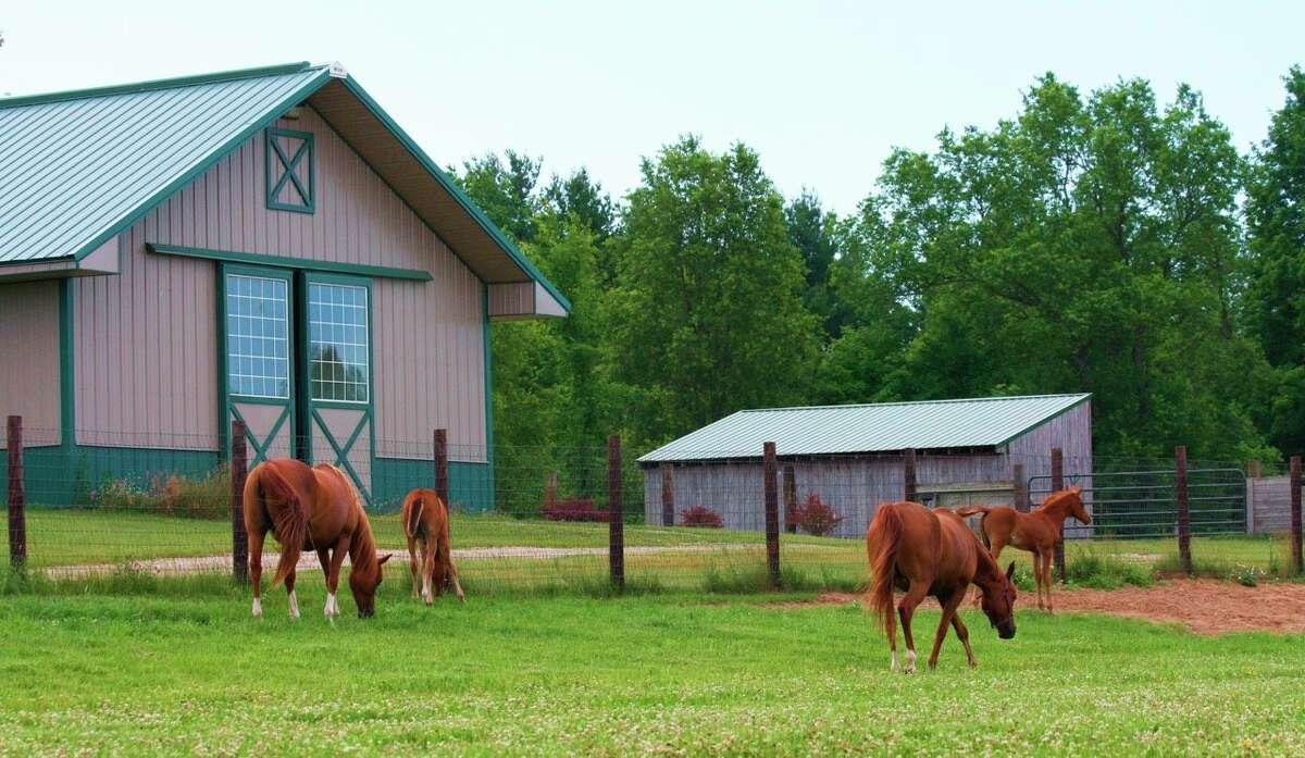 A wide array of mares and stallions have passed through the gates of Twin Creek Farm. (Photo courtesy/Theresa Rorabaugh)