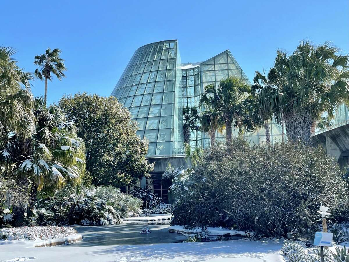 Snow photos from the winter storm at the San Antonio Botanical Gardens in February 2021.
