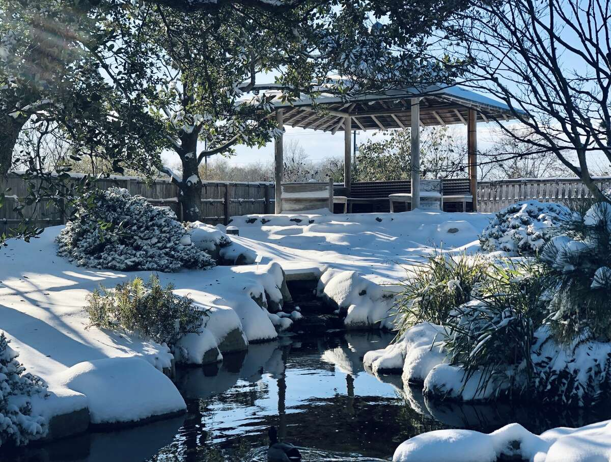 Photos from the winter storm at the San Antonio Botanical Gardens, February 2021.