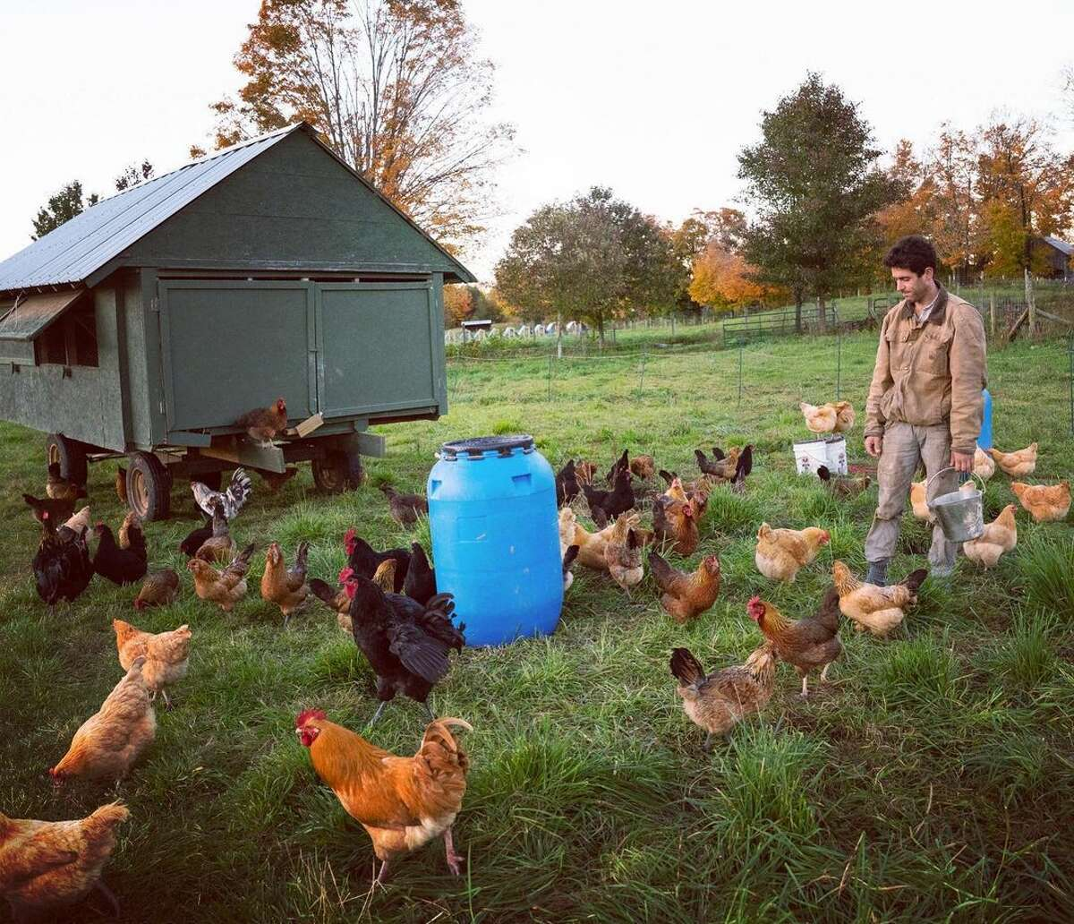The Premier Pastures' CSA offering includes a chicken-only share (sold as a stand-alone subscription or as part of a larger meat share purchase), or an egg-only package. Purchase now for a pickup shortly after Father's Day on July 3.