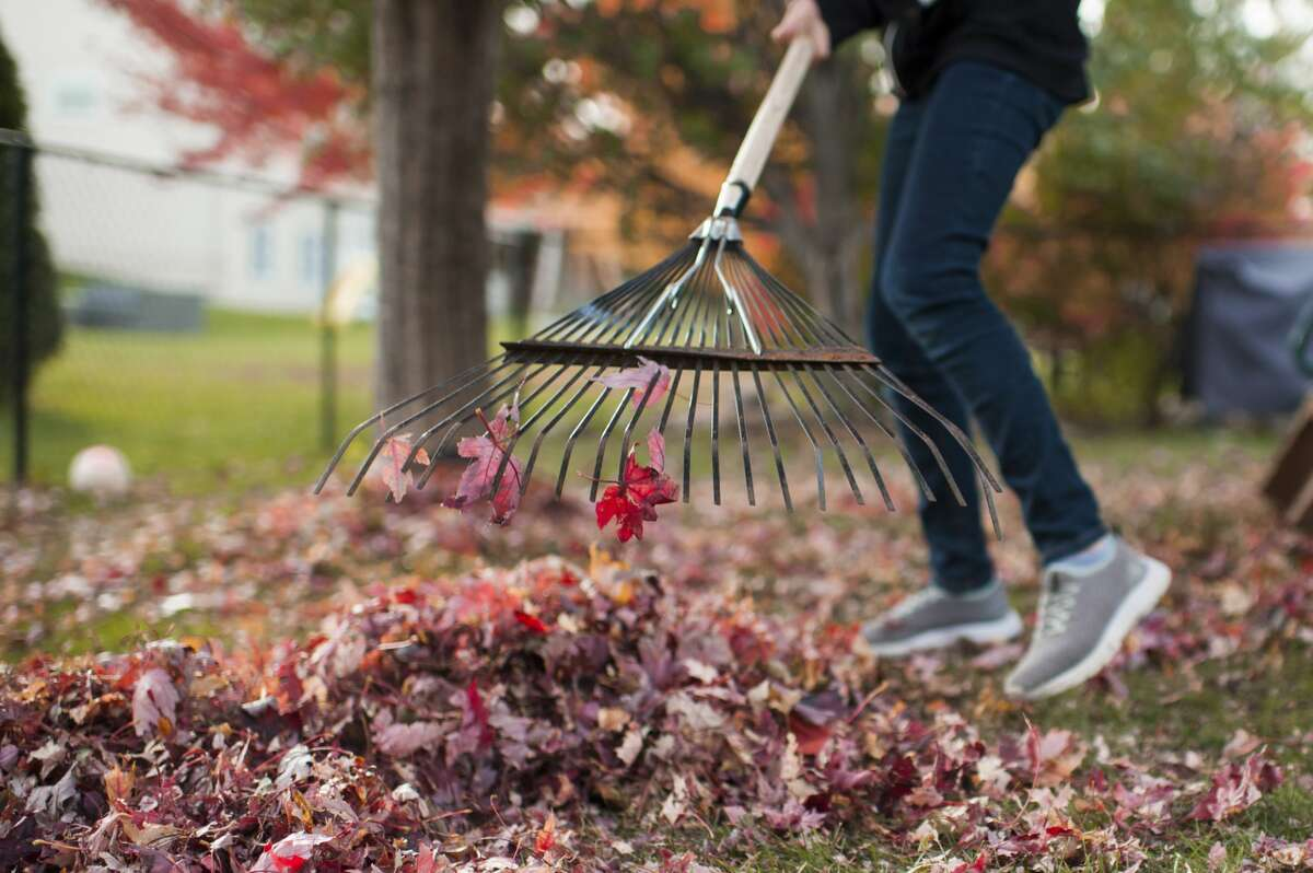 Rake leaves away from any drainage areas and away from the house to avoid flooding during the winter.