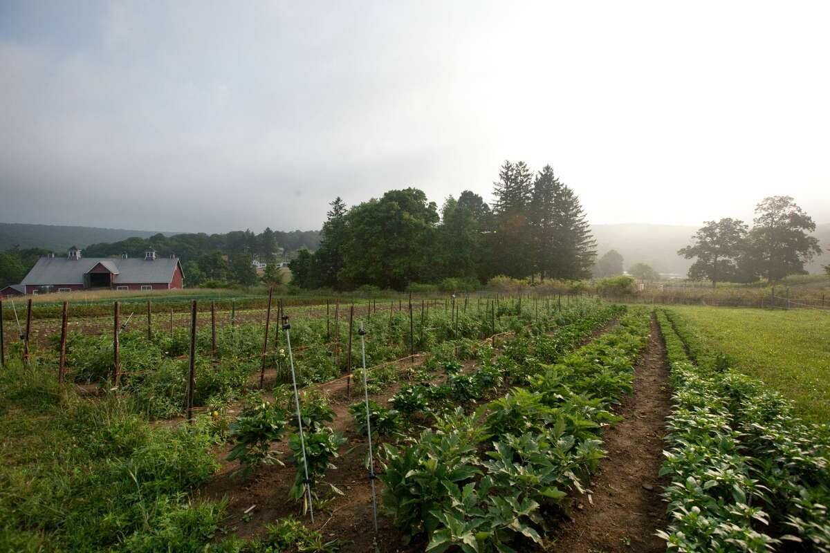 The rising popularity of Hudson Valley farm share programs can be seen in the growth of CSA shares each farm sells. In two years, the average number of shares more than doubled from 50 shares per farm in 2018 to 131 in 2020.