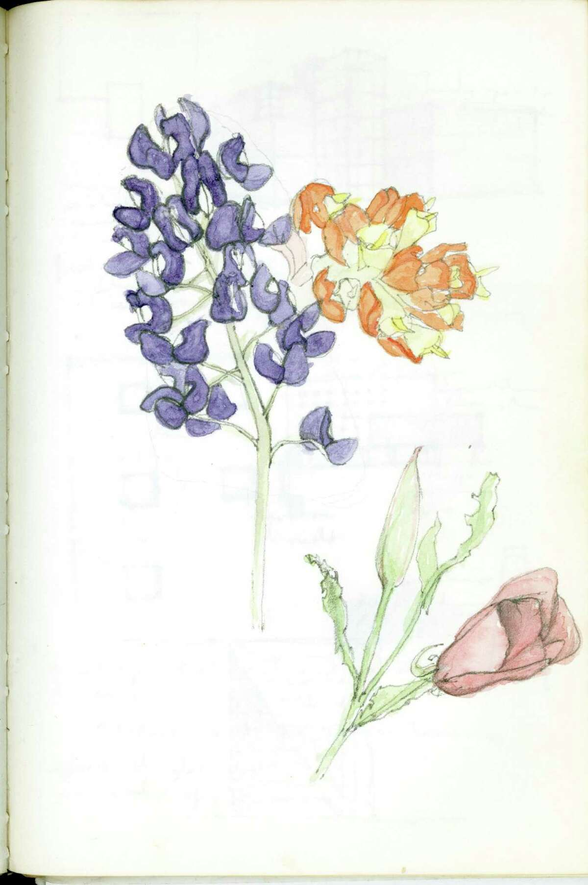 A drawing of flowers by Reagan Miller.