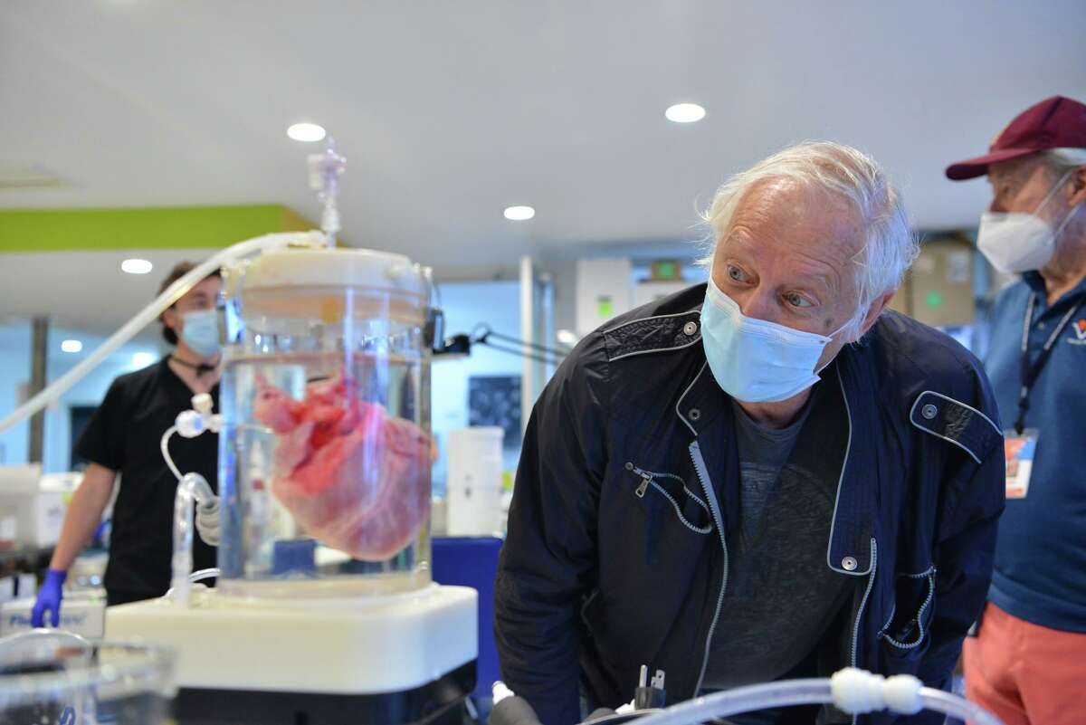 Retired UT Health San Antonio professor Leon Bunegin looks at a pig heart at Vascular Perfusion Solutions Inc. Sunday morning as testing continues on a device he invented that could allow donated human hearts to remain viable in transport for up to eight hours, twice as long as the current system.