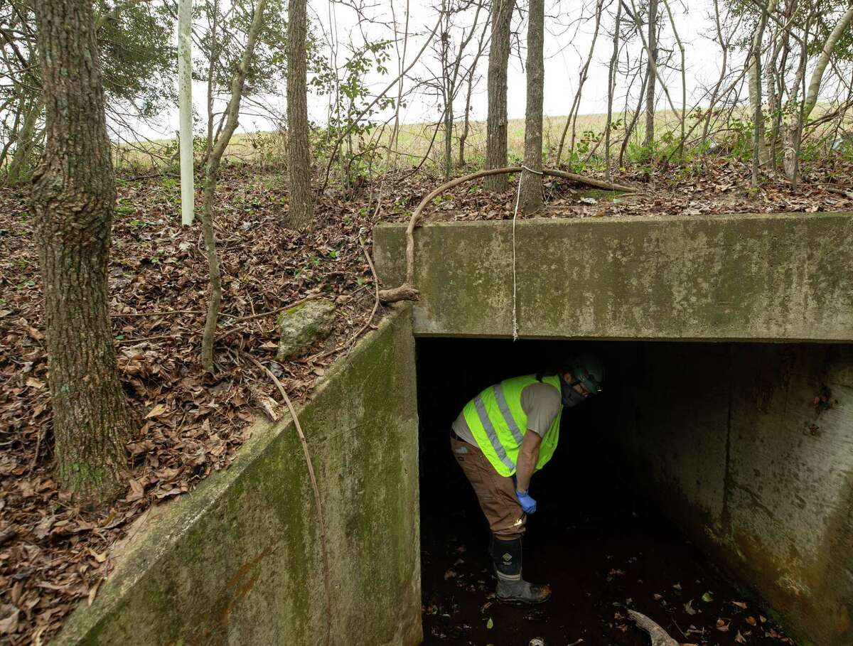 Texas Parks and Wildlife biologist Nate Fuller studies the tricolored bats found inside a culvert which is located under Highway 45 on Friday, March 12, 2021, north of Houston. Fuller specializes in white-nose syndrome, which is a fungus that has been killing bats nationwide and is threatening bas in Texas as well. He was checking on this particular cluster of bats to see how they fared after the winter storm that affected the state.