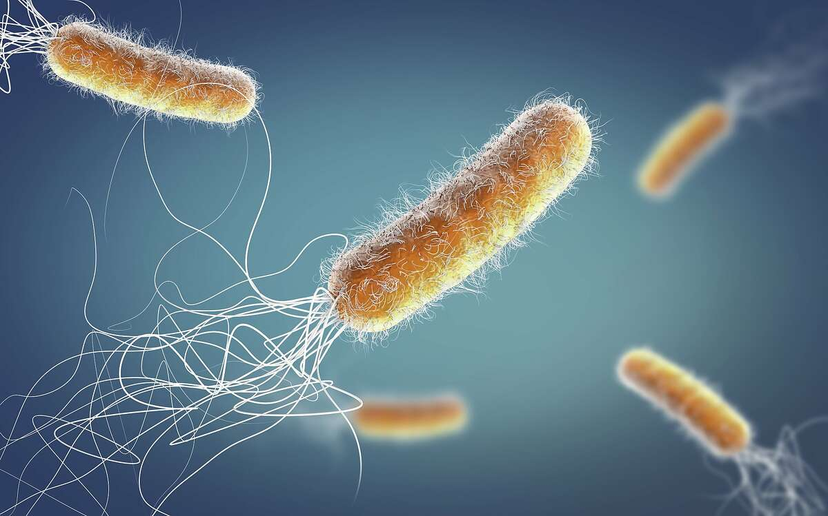 Superbugs have cemented their place as a health crisis parallel to the pandemic.