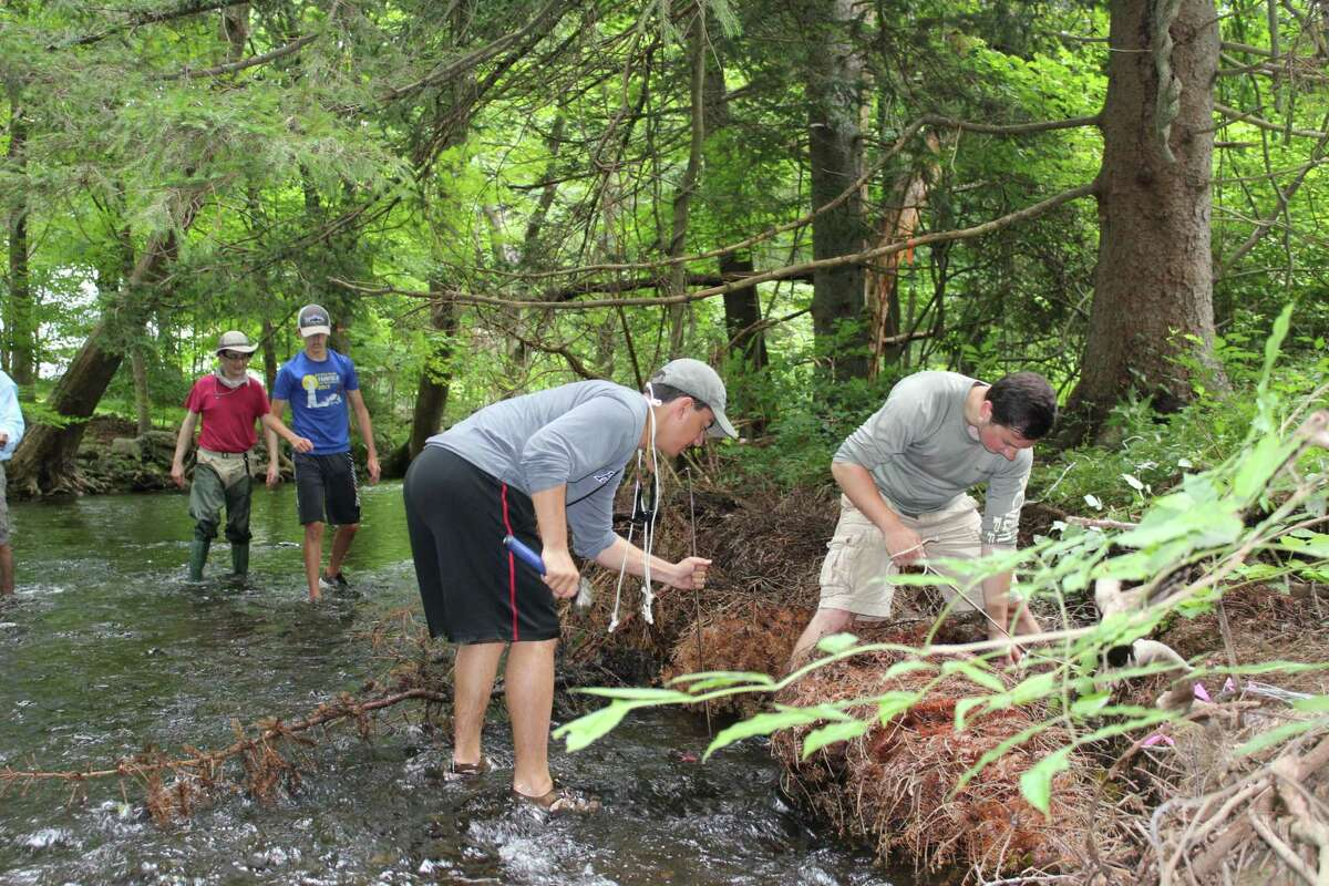 Volunteers from Trout Unlimited affix discarded Christmas trees to the banks and bed of the Mill River in an effort to restore its banks and natural flow in August of 2018.