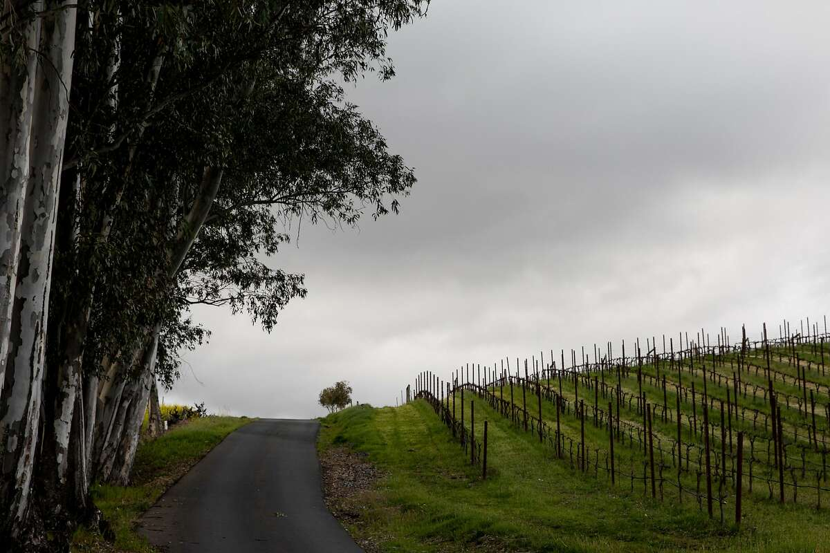 The road leading to Christopher Creek Winery, owned by Windsor mayor Dominic Foppoli, in the outskirts of Healdsburg.