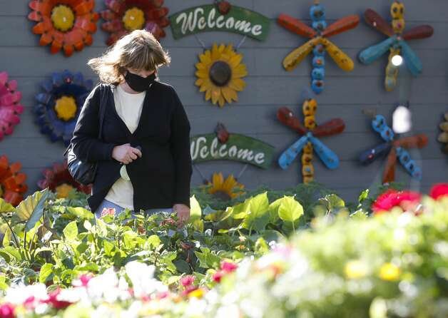 Kathy Harrison looks for flowers to replace ones that died in the recent freeze at Quality Fruit, Thursday, March 18, 2021, in Conroe. Photo: Jason Fochtman/Staff Photographer
