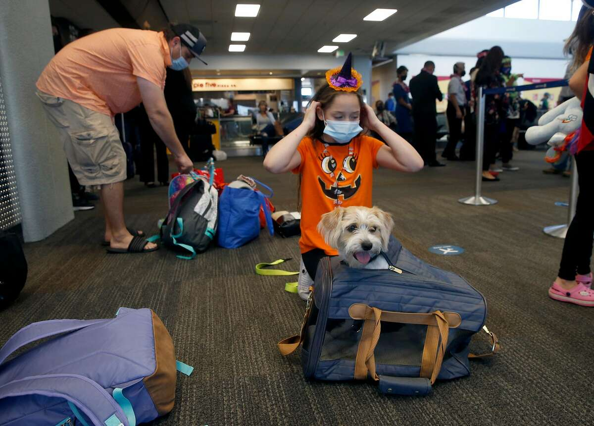 Ella Sidlow prepares dog Cookieto fly home to Honolulu at SFO in San Francisco, where a rapid coronavirus testing site provides travelers with documentation of test results.