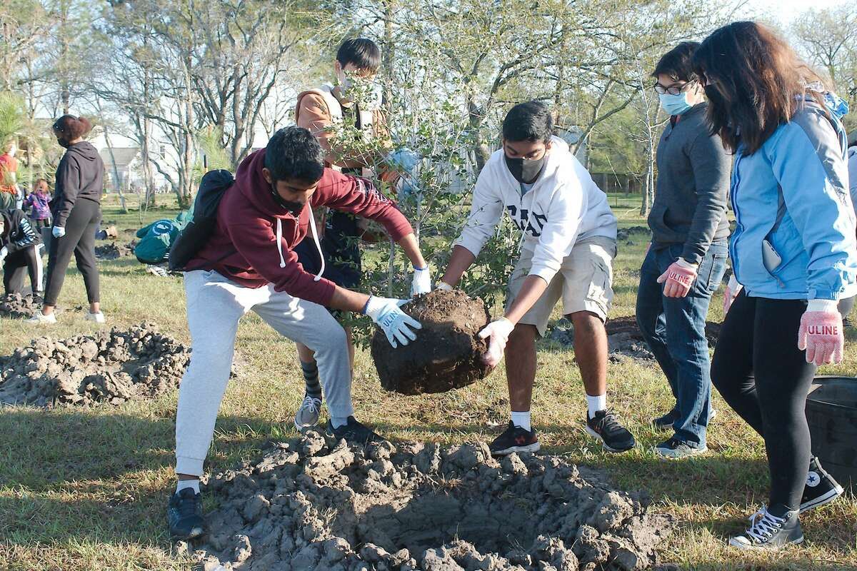 Shadow Creek High School Interact Club members Ishaan Naik and Abel Thomas place a tree in a hole as volunteers plant native tree species including oak, maple, pine and cedar along the walking trail at the John Hargrove Environmental Complex Saturday, during Keep Pearland Beautiful Plant a Tree Day.