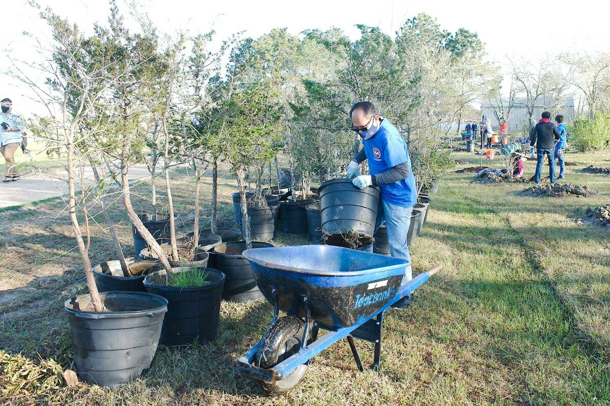 Volunteers plant native tree species including oak, maple, pine and cedar along the walking trail at the John Hargrove Environmental Complex Saturday, during Keep Pearland Beautiful Plant a Tree Day.