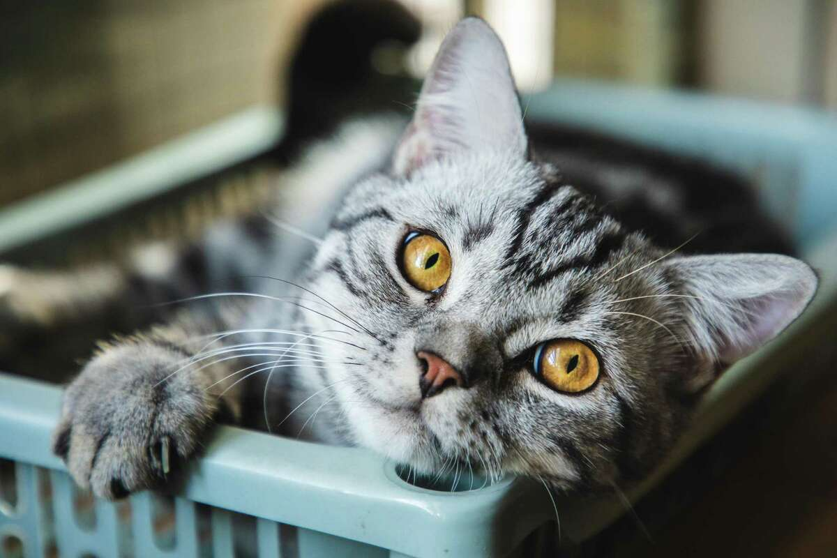 There are many easy things you can do to make your indoor cat happier.