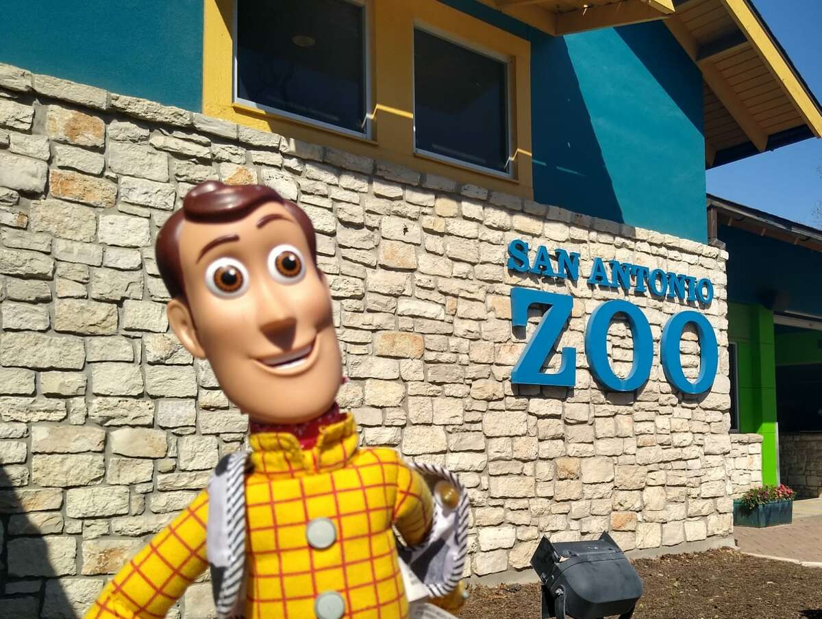 A San Antonio area boy lost his toy Woody during a visit to the San Antonio Zoo over the weekend. The zoo found it and he will be reunited with it this weekend.
