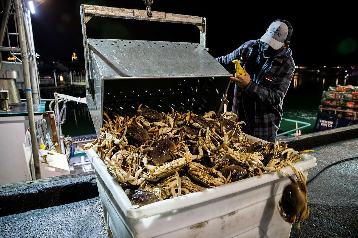 Martin Cornejo unloads a crate of live Dungeness crabs from the commercial fishing vessel Migrator into a container dockside at Pier 45 in San Francisco.