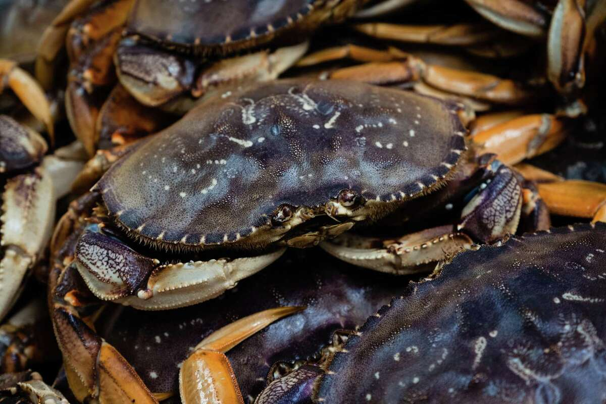 The first catches of the delayed Dungeness crab season arrive in San Francisco on Jan. 13.