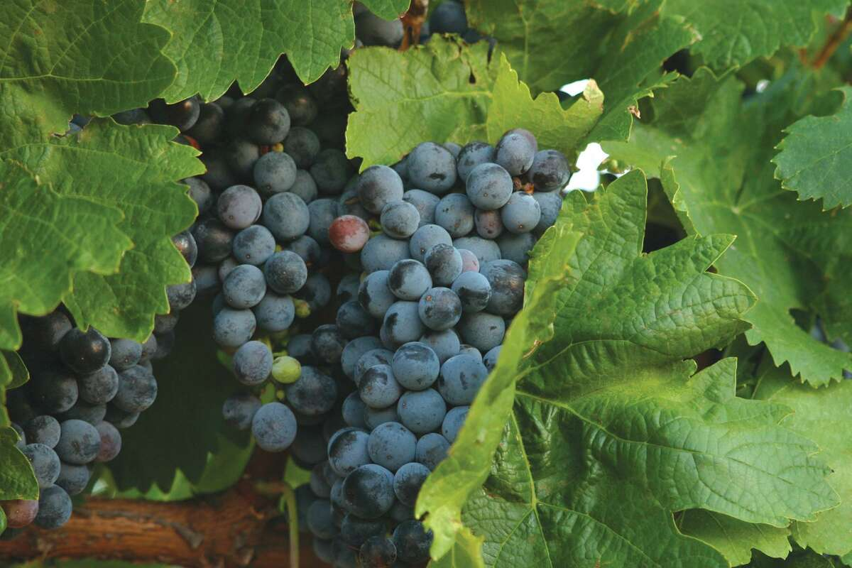 Texas High Plains AVA features about 85 percent of the wine grapes grown in Texas.