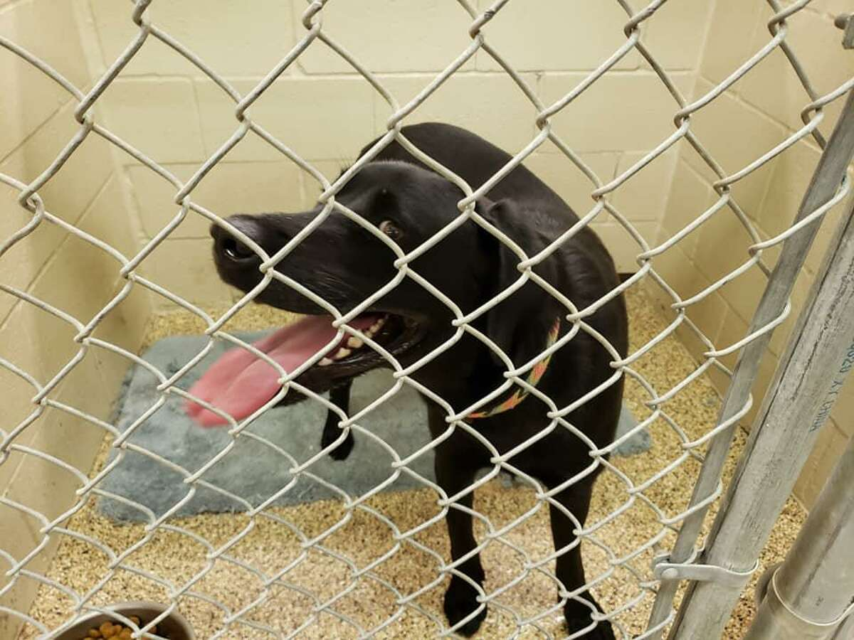 Dog, a former stray, was living in Katy Animal Shelter until Katy Police Chief Noe Diaz met him.