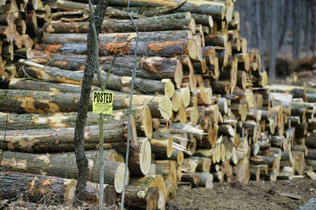 A view of a logging operation taking place on land along Cedar Bluff Road on Witt Construction property on Wednesday, March 24, 2021, in the Town of Saratoga. The town has yet to approve Witt's subdivision, but the trees are coming down anyway. (Paul Buckowski/Times Union)