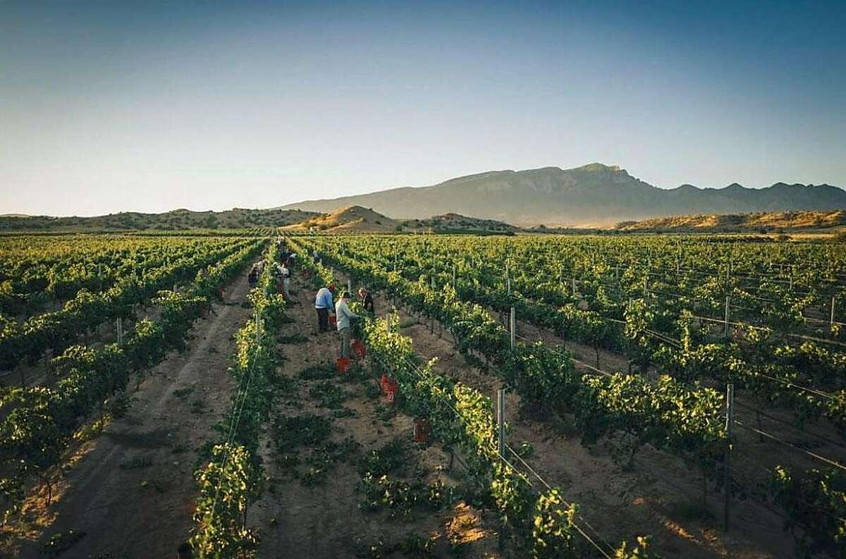 Gruet Vineyards of Albuquerque, New Mexico won the Sparkling Sweepstake category for its 2012 Blanc de Blancs.