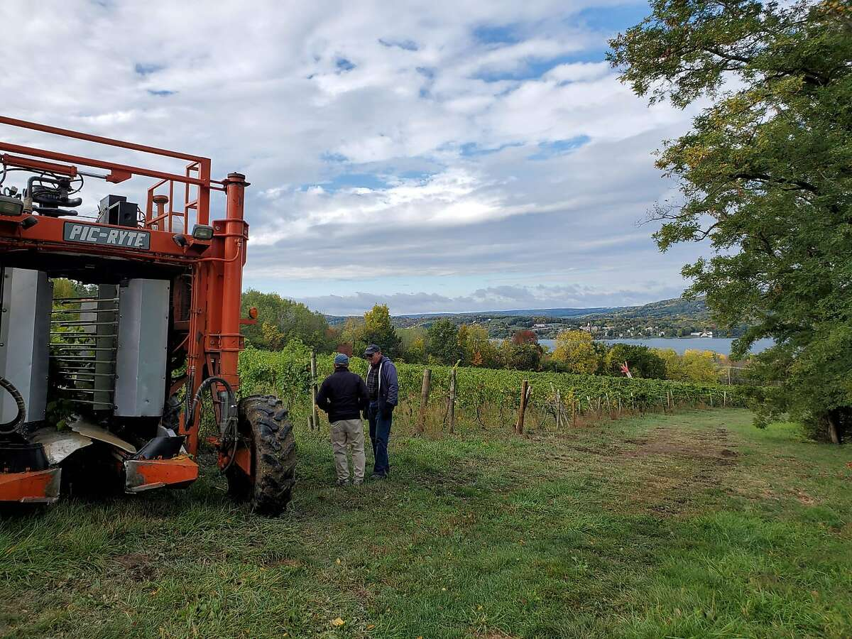 Keuka Spring Vineyards owner Len Wiltberger, left, discusses the 2020 French hybrid white Vignoles grape harvest with fellow grape grower Tom Hunt.
