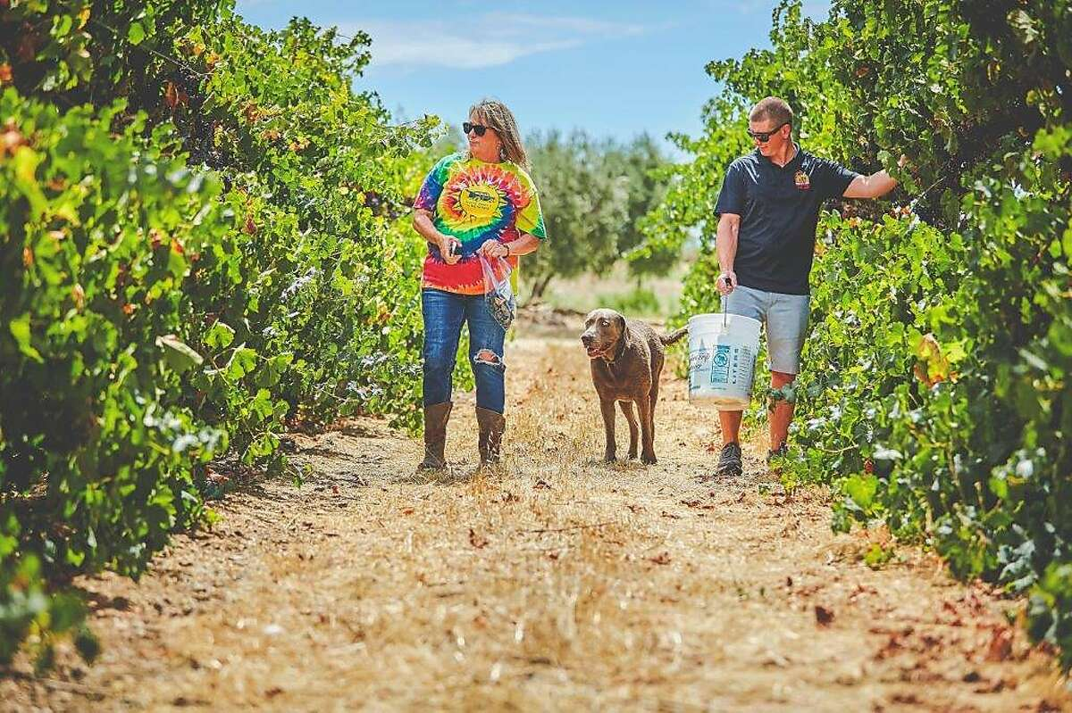 Wood Family Vineyards owner Rhonda Wood walks through the vineyard with assistant winemaker Alec Fraser and her dog, Sauvy.