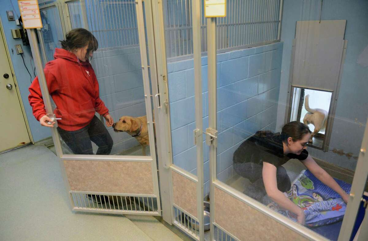 A past feeding and play time for dogs at the New Fairfield Sherman Animal Welfare Society in New Fairfield.