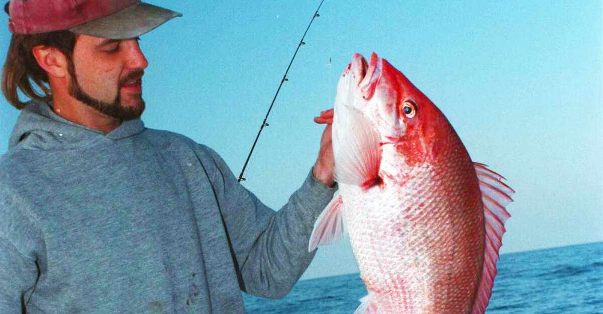 The Great Red Snapper Count is in. And there are three times as many snapper in the Gulf as previously thought.