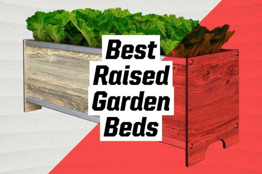 They instantly make your garden look well-designed and organized by defining space and creating pathways.