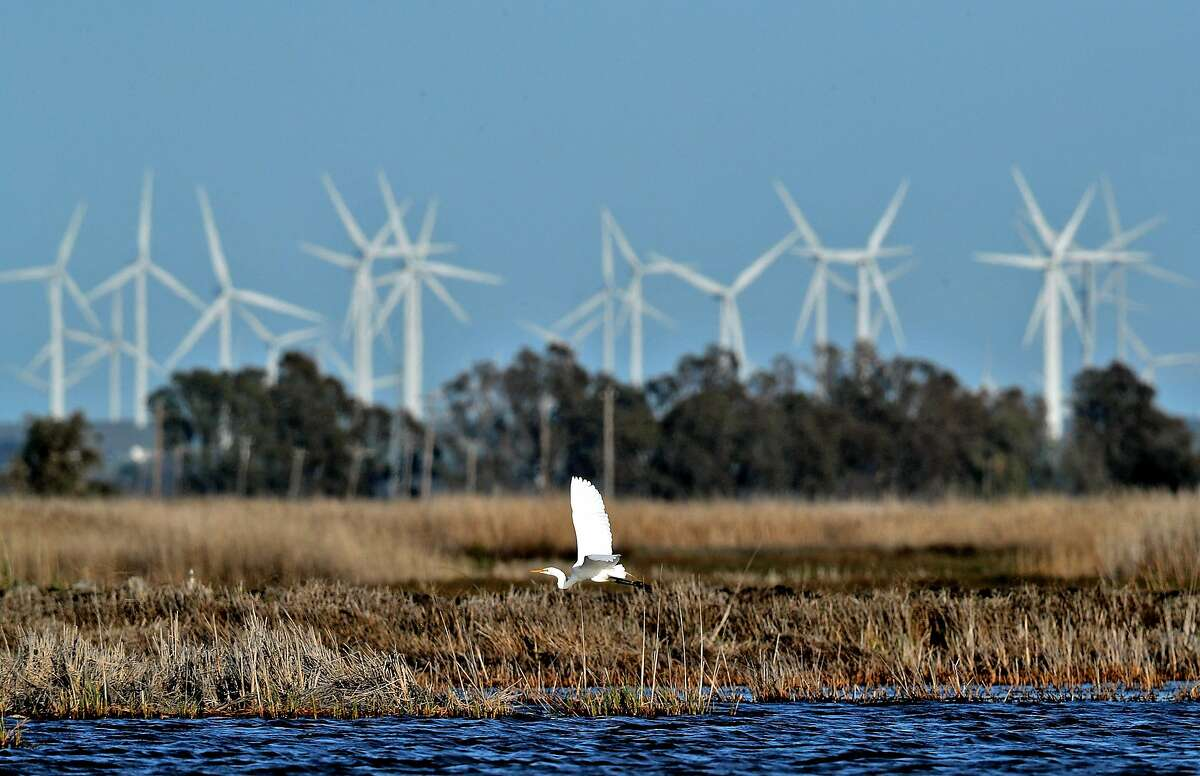 A great egret flies over Grizzly Island in Suisun Marsh. The vast tidal estuary connected to the San Francisco Bay also provides habitat for several endangered plants and animals.
